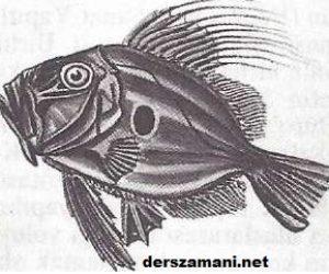 Dülger Balığı Özellikleri
