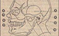 Yüz Kemikleri Nelerdir