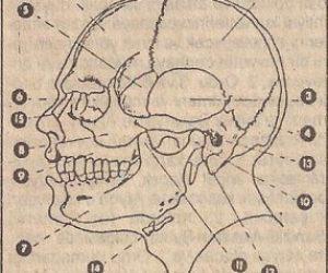 Kemik Doku ve Yapısına Göre Kemik Çeşitleri