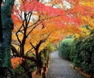 Sonbahar Mevsimi ile İlgili Kompozisyon
