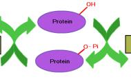 Fosforilasyon Nedir Fosforilasyon Çeşitleri ve Özellikleri