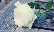 Beyaz Giyme Toz Olur Türküsünün Hikayesi Kısa
