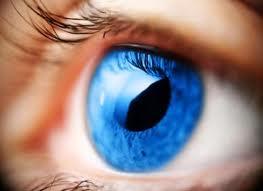 göz hakkında bilgi