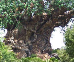 Türkiye'de Bulunan Anıt Ağaçlar
