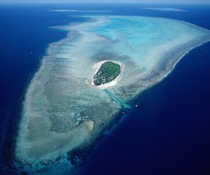Mercan Resifi Nedir Nerelerde Bulunur