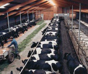Hayvancılık En Çok Nerede Yapılır