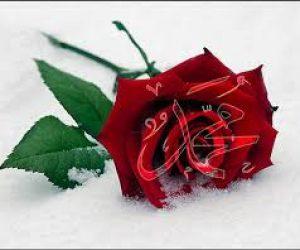Hz Muhammedin İnsanlar Arasındaki Farklılıklara Bakışı Hakkında Neler Söylenebilir