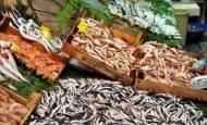 Denizlerde Balıkların Azalmasına Neden Olan Etkenler