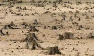 Ormanların Yok Edilmesi İnsanları Nasıl Etkiler