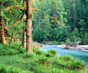 Orman Haftası İle İlgili Bilgi