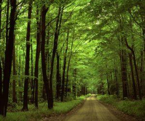 Orman Haftası İle İlgili Yazılar