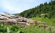 Ormanlardan Hangi Ürünler Elde Edilir