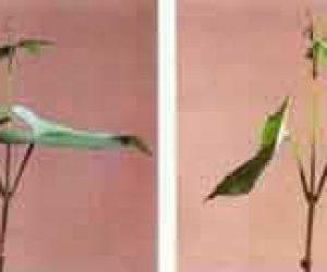 Bitkiler Nasıl Hareket Etmektedir