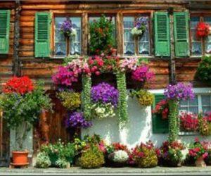 Ev Bahçesinde Kullanılan Bitkiler