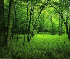 Orman Kaç Yılda Oluşur Kısaca