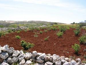 Malta 08 terra rossa