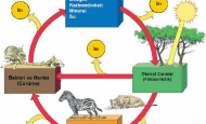 Ekosistem Nedir Ekosistem Özellikleri Nelerdir