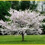 ilkbahar-mevsim