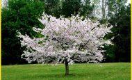 İlkbahar Mevsimi Hakkında Kompozisyon