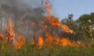 Orman Yangınlarından Korunma Yolları Kısaca Maddeler Halinde