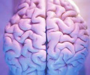 Beynin Görevleri Nelerdir