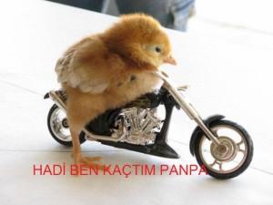 panpa_100634_m