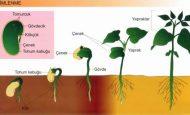Tohumun Çimlenmesi İçin Gerekli Faktörler Nelerdir