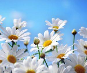 Çiçek Dalında Güzeldir Sözü İle İlgili Kompozisyon