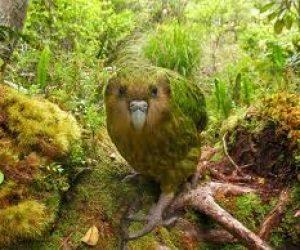 Soyu Tükenmekte Olan Kuş Türleri İle İlgili Haber Yazısı