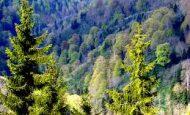 Ormanlara Sahip Çıkarak Neler Kazanabiliriz
