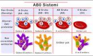 Kan Grupları ve Özellikleri Nelerdir