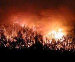 Ormanlık Alanların Azalmasının Nedenleri
