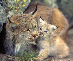 Türkiye'de Nesli Tükenmekte Olan Hayvanlar