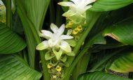 Bitkileri Diğer Canlılardan Ayıran Özellikler