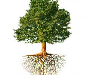 Ağaç Ne Kadar Uzasa Göğe Değmez Anlamı