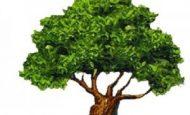 Ağaçların Kesilmesi Nelere Yol Açar