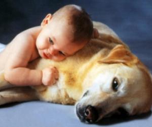 Hayvan Sevgisi Kompozisyon