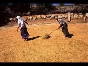 HARMANA-SERERLER-hazira-daglar-dayanmaz-atasozunun-anlami_23_23721