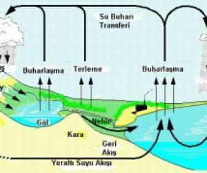 Asit Yağmurlarının Nedenleri ve Canlılar Üzerindeki Etkileri