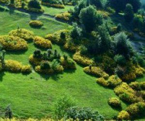 Bitki Örtüsü Nedir Coğrafya