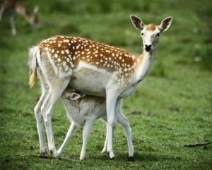 hayvanlarda-büyüme-ve-gelişme-faktörleri