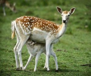 Hayvanlarda Gelişim Sürecine Etki Eden Faktörler