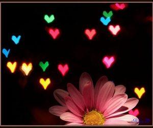 Sevgi ve Hoşgörünün Toplumsal İlişkilere Ne Gibi Olumlu Katkıları Vardır