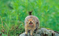 Vahşi Doğada Hayatta Nasıl Kalınır