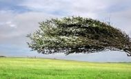 Ağaç Yaşken Eğilir Atasözü İle İlgili Kompozisyon
