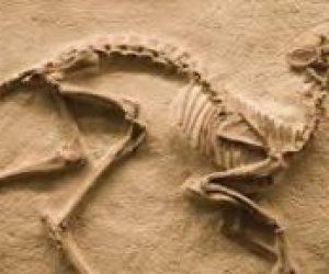 Fosil Nedir Nasıl Oluşur