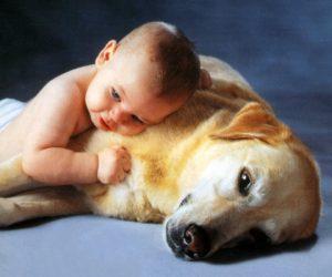 İnsanlar ve Hayvanları Ayıran Özellikler Nelerdir