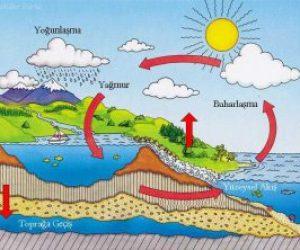Ekosistemde Su Döngüsü Nedir