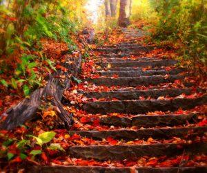 Sonbahar Mevsimi Ne Zaman Başlar Ne Zaman Biter