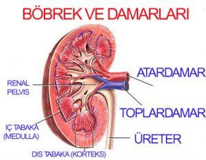 bobrek-hastaligi-1